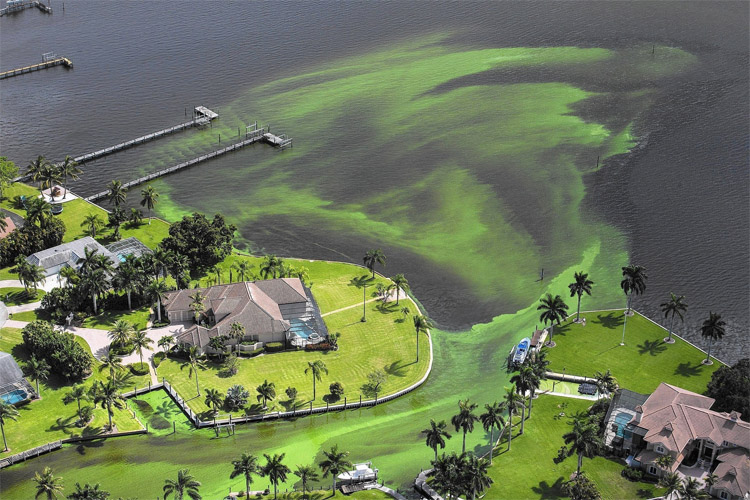 Florida: the smelly, algae blooms invaded the Atlantic beaches | Photo: Greg Lovett/AP