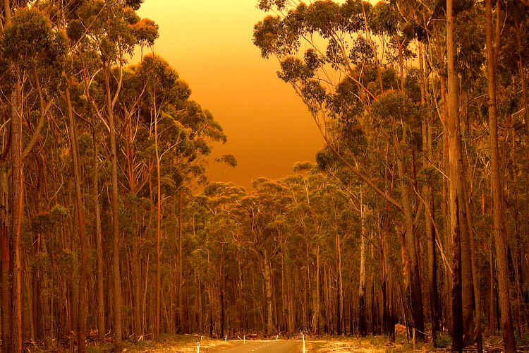 2019/2020 Australia fires: thousands of people were evacuated from East Gippsland | Photo: Reid/Creative Commons