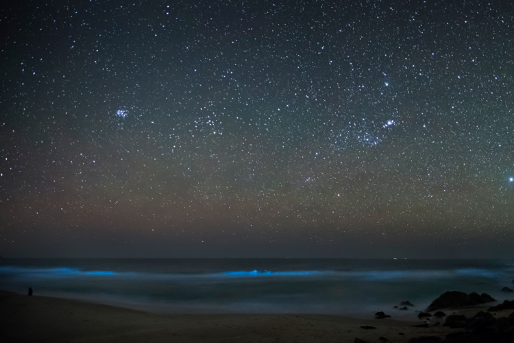 Bioluminescence: a magical blue light that sometimes appear in worldwide beaches | Photo: Creative Commons