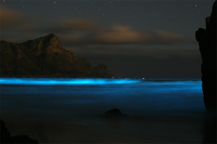 Bioluminescence: a chemical process that illuminates the ocean, the waves and the shoreline with a blue glow at night | Photo: Creative Commons