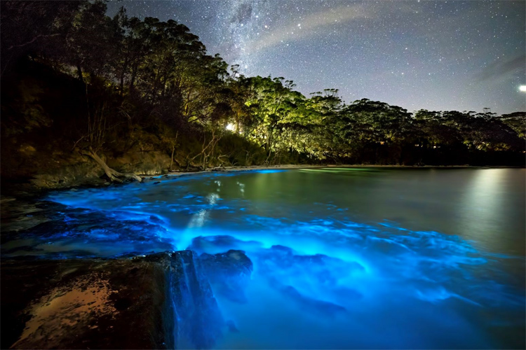 Bioluminescence: a natural phenomenon that light up the ocean waves | Photo: Sports and Travel