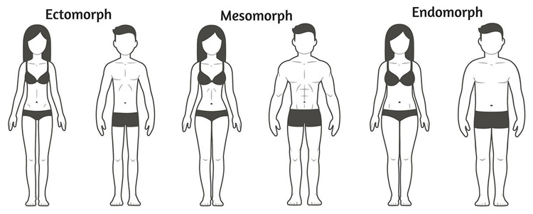 The three body types: the ectomorph, the mesomorph, and the endomorph