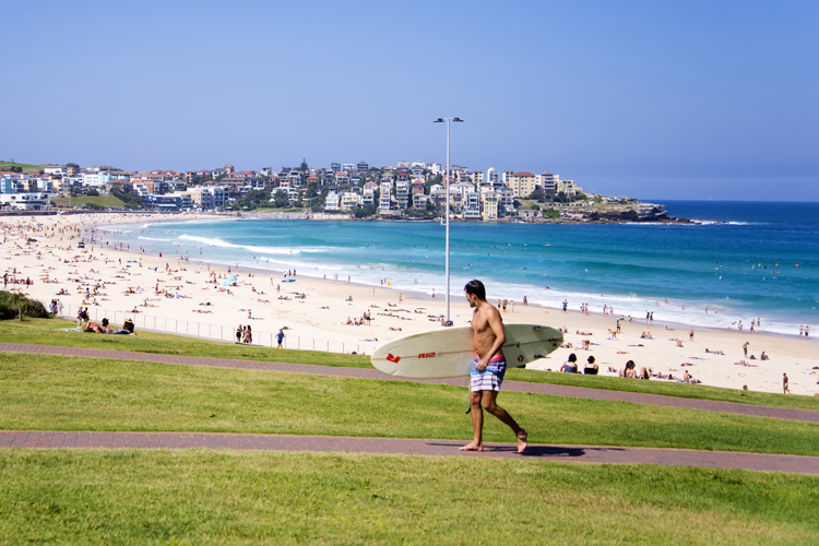 Bondi Beach: the Clever Buoy will warn surfers and swimmers of the presence of sharks