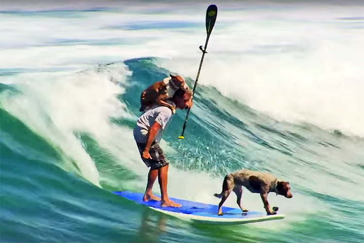 Chris de Aboitiz: the Australian surf dog trainer