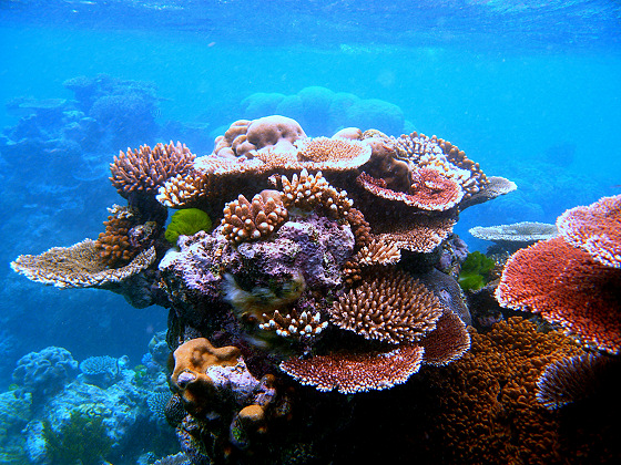 Coral: acidity plays a crucial role in reefs