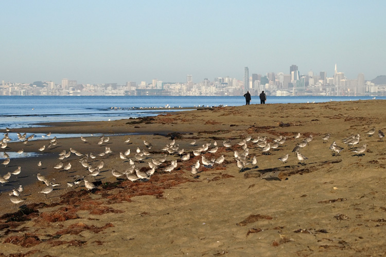 Crown Memorial State Beach: a popular kite spot in Alameda, California | Photo: Taylar/Creative Commons