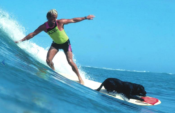The Dog's Guide to Surfing: hang in there...dude