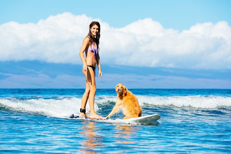 Dog surfing: some dog breeds love water and waves | Photo: Shutterstock
