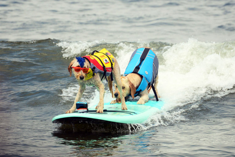 Soggy dogs ride the waves at the annual Dog Surfing Championships