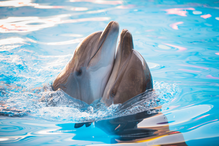 Dolphins: intelligent and highly playful creatures | Photo: Shutterstock