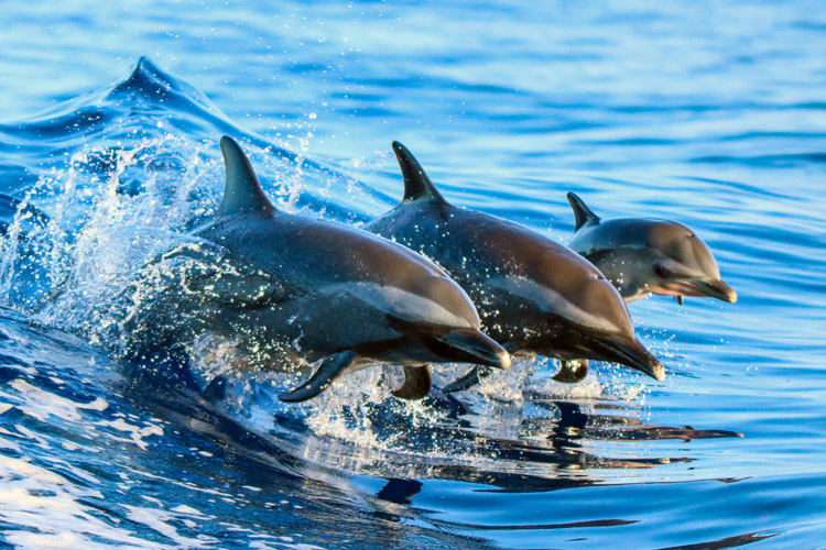 50 amazing facts about dolphins