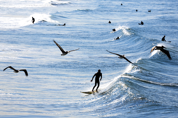 Surfers: protectors of the beach and guardians of marine life | Photo: Shutterstock