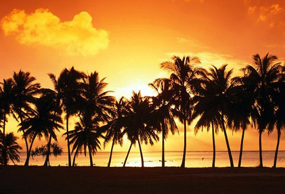 Florida: Ponce de Leon was the first to surf these palm trees