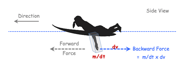 Forces acting on a person's feet swimming