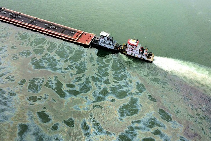 Galveston Bay oil spill: Nature always pays the price