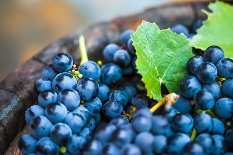 Grapes: they protect against allergies | Photo: Shutterstock