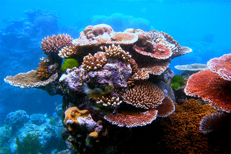 The Great Barrier Reef: our oceans are in danger | Photo: Toby Hudson/Creative Commons