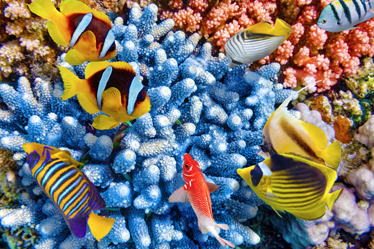 Great Barrier Reef: home to over 2,000 marine species | Photo: Shutterstock