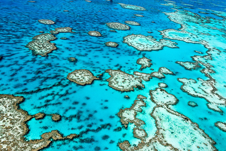 Great Barrier Reef: global warming and pollution are its main threats | Photo: Shutterstock