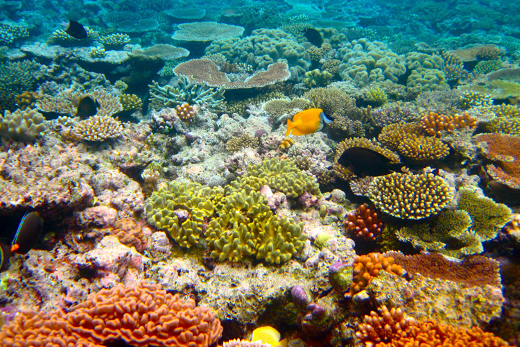 Great Barrier Reef: the world's largest living structure | Photo: Shutterstock