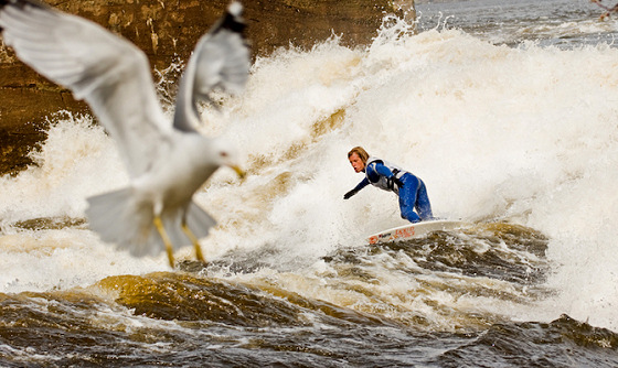 Julien Fillion: even the sea gull is scared