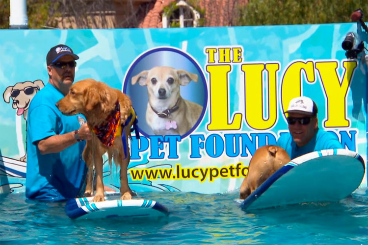 Lucy Pet's Gnarly Crankin' K-9 Wavemaker: a mobile surf pool for dogs