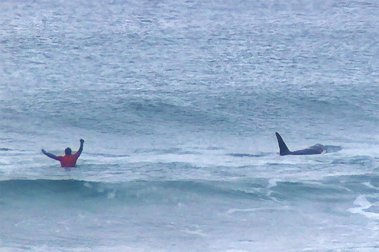 2017 Lofoten Masters: a killer whale stormed the Norwegian surf contes