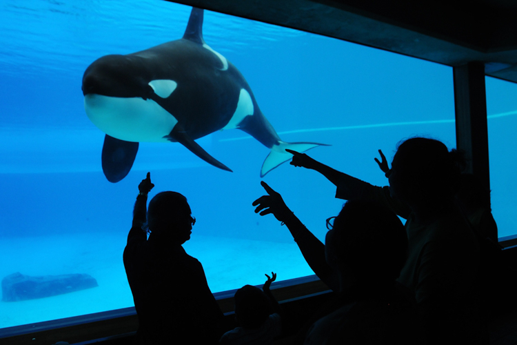 Marine parks: a prision for animals | Photo: Jo-Anne McArthur/We Animals