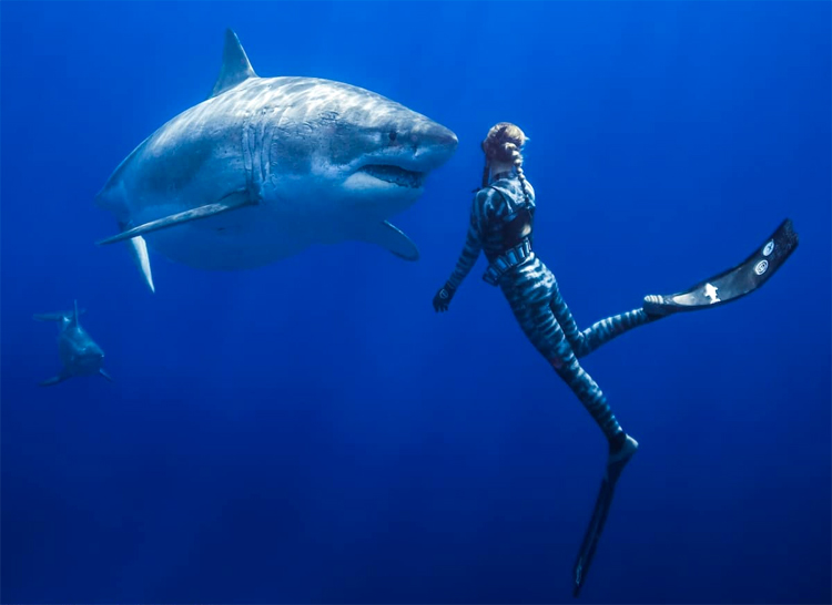 Ocean Ramsey: the Hawaiian waterwoman started swimming with sharks when she was only 14 years old | Photo: Oliphant/One Ocean Diving