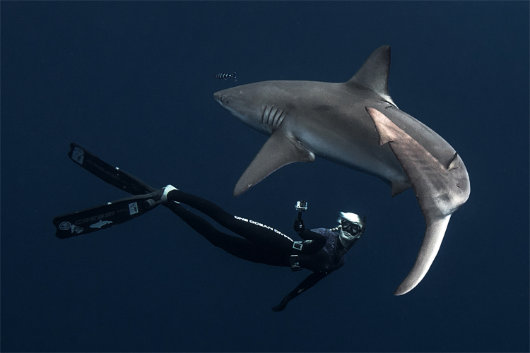Ocean Ramsey: she has swum with nearly 50 shark species | Photo: Oliphant/One Ocean Diving