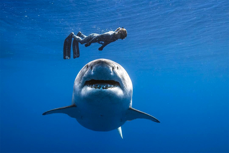 Ocean Ramsey: marine biologist, freediver, and shark conservationist | Photo: Oliphant/One Ocean Diving