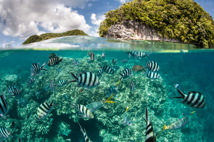 Ocean: a complex ecosystem that interacts with the atmosphere and human life | Photo: Shutterstock