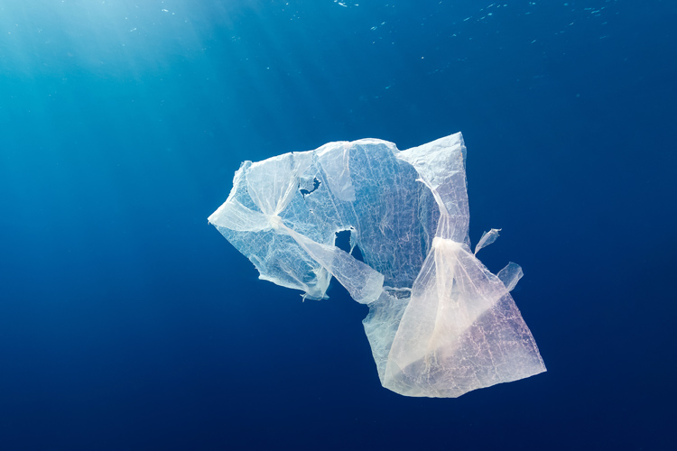 Grocery bags: 80 percent of all trash floating in the oceans is made of plastic | Photo: Shutterstock