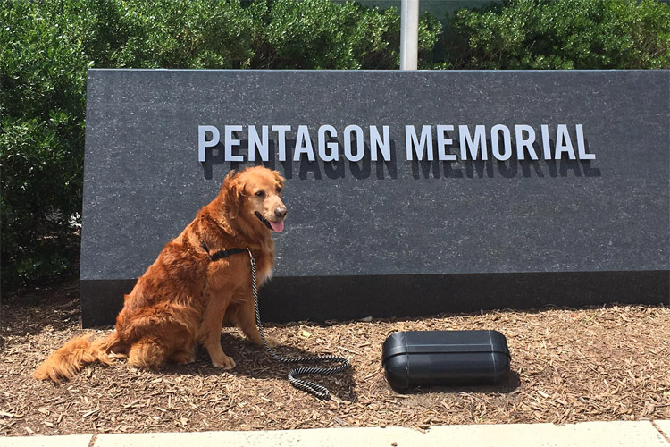 Surf Dog Ricochet: posing at the Pentagon Memorial | Photo: SDR