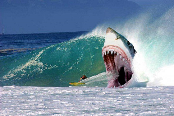 The best photoshopped surfing pictures