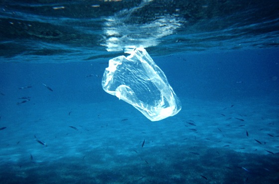 Plastic bags: a threaten to the natural world