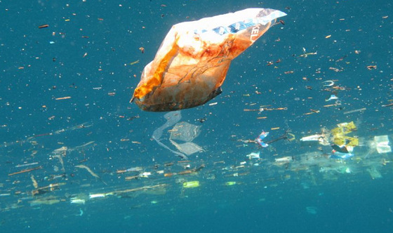 Plastic bags: the cancer of the oceans