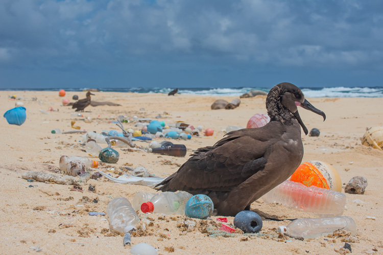 Plastics: the waters of the Great Pacific Garbage Patch hold 180 times more plastic than marine life by weight | Photo: The Ocean Cleanup