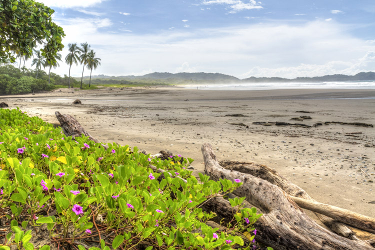 Playa Guiones: a seven-kilometer long surfing beach located in Nosara | Photo: Shutterstock
