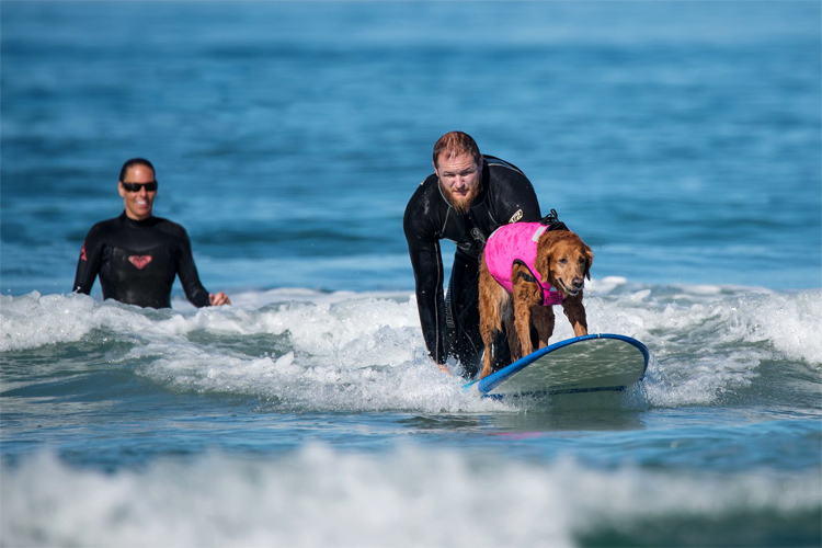 Surf Dog Ricochet: helping veterans with PTSD recover faster | Photo: Surf Dog Ricochet