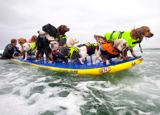 San Diego Surf Dog Competition: riding a wave for the Guinness World Records