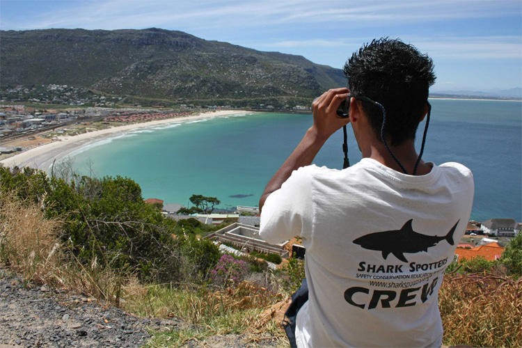 Shark spotter: the person who monitors and detects the presence of the ocean