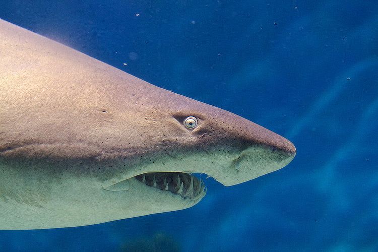 Sharks: they are scaring tourists away from Australia | Photo: VirtualWolf/Creative Commons