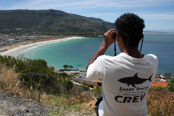 Shark Spotters: studying trends in South Africa