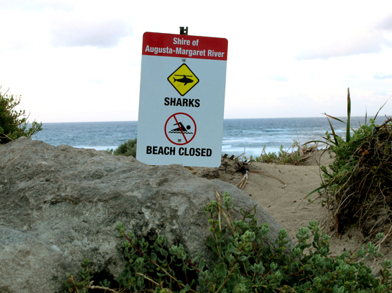 Sharks: stay out