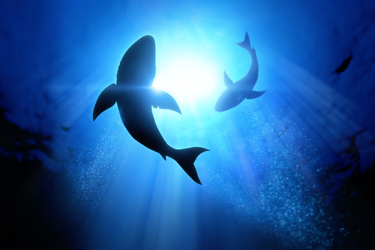 Sharks: surfers and swimmers are not on his diet | Photo: Shutterstock