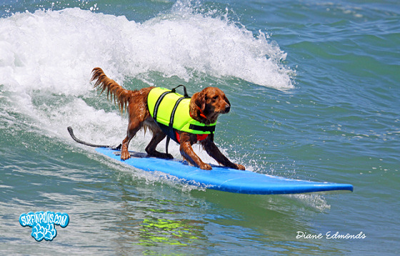 Surf Dog | Rip Curl Ricki