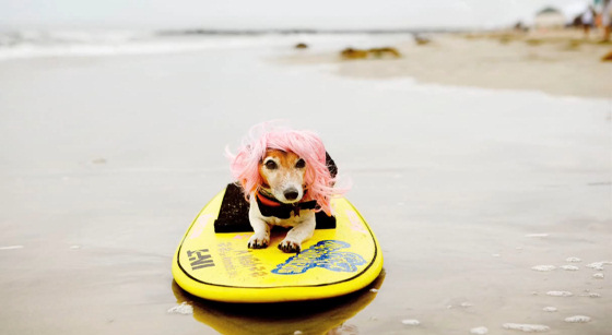 Steve Jobs believes surfing dogs will help boost his iPad sales