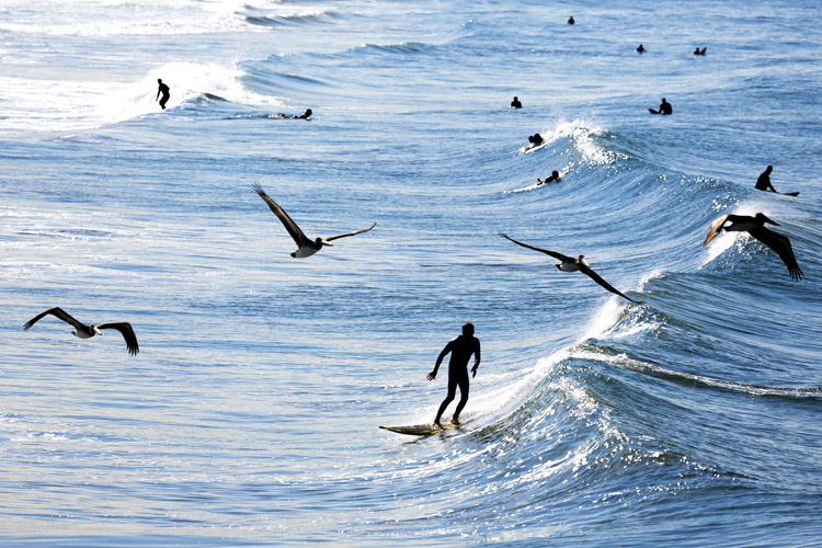 Surfing: an individual(and individualistic sport | Photo: Shutterstock
