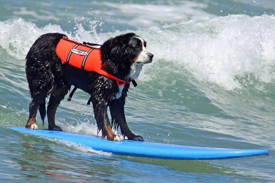Surfer dog: style and technique